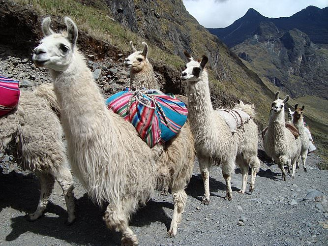 Trekking with Lamas - Andean Spirit Lodge