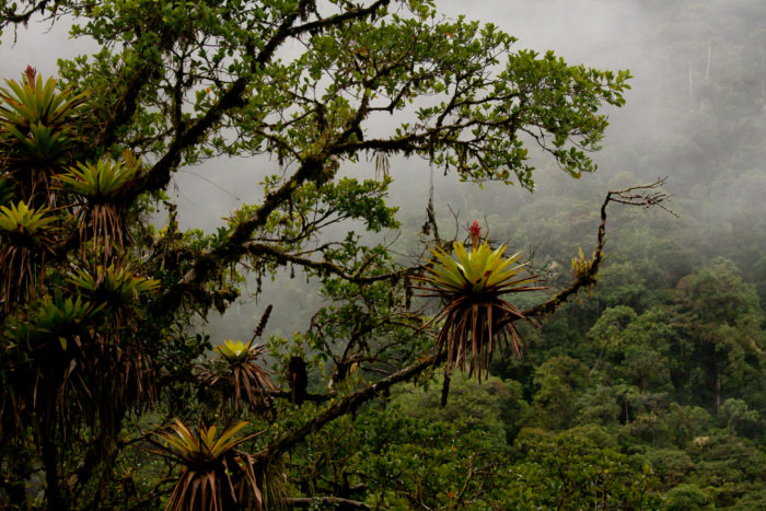 Cloud Forest in Peru - Vegetarian Peru Adventures