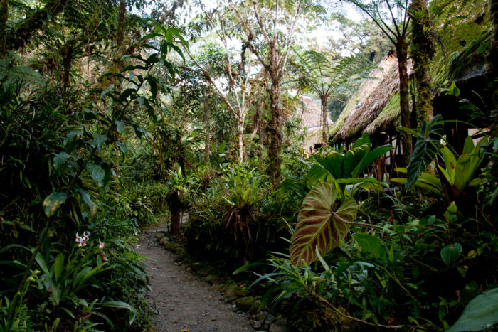 Cloud Forest Lodge in Peru - Vegetarian Peru Adventures