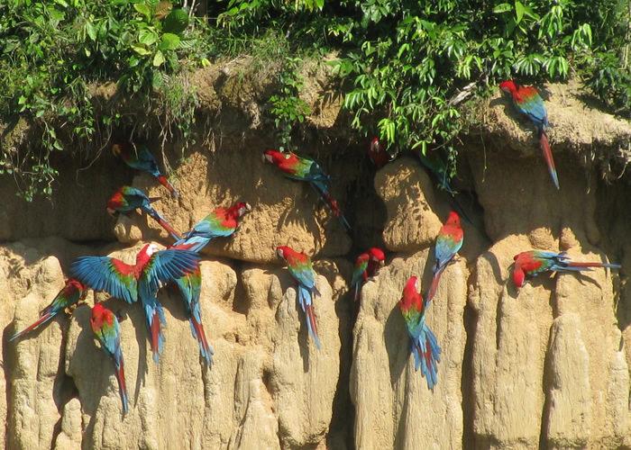 Macaw Lick - Vegetarian Peru Adventures