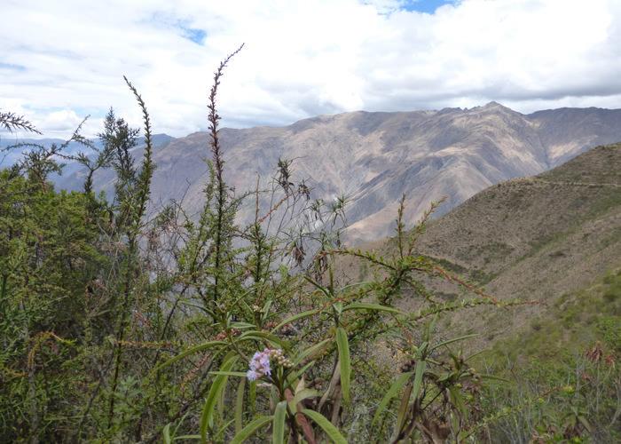 Hiking to Chonta - Vegetarian Peru Adventures