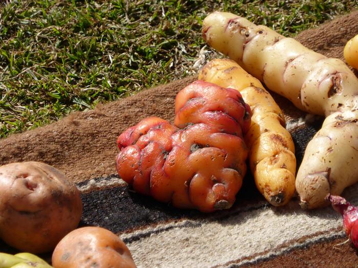 Andean Tubers - Vegetarian Peru Adventures